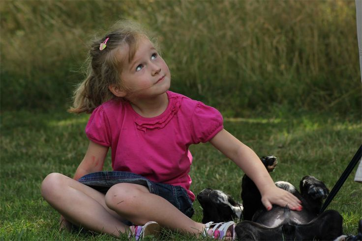 Puppy Training Classes in Worcestershire