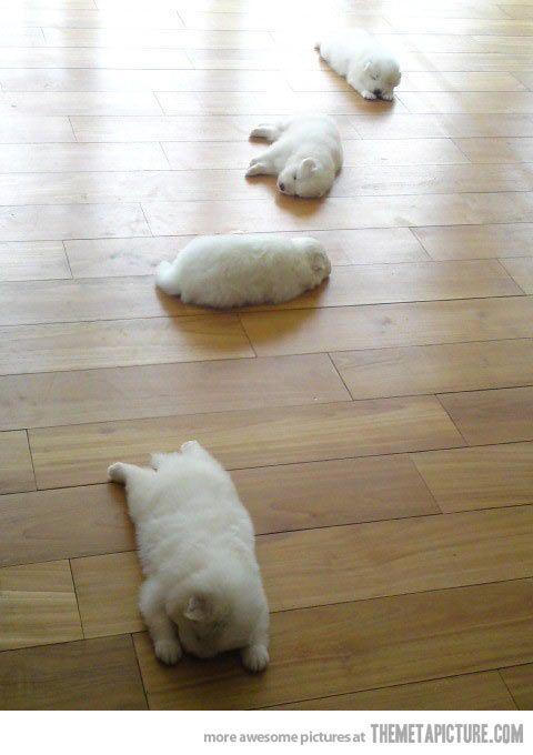 Trail of sleepy puppies…