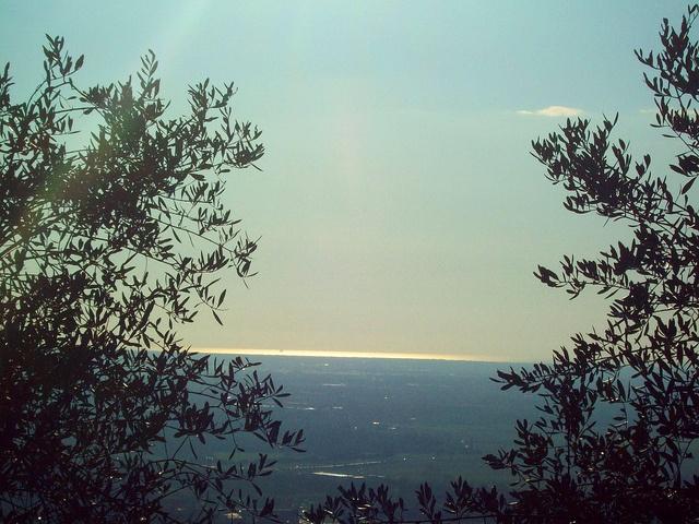 gli ulivi di Montemagno -Pisa- Italy