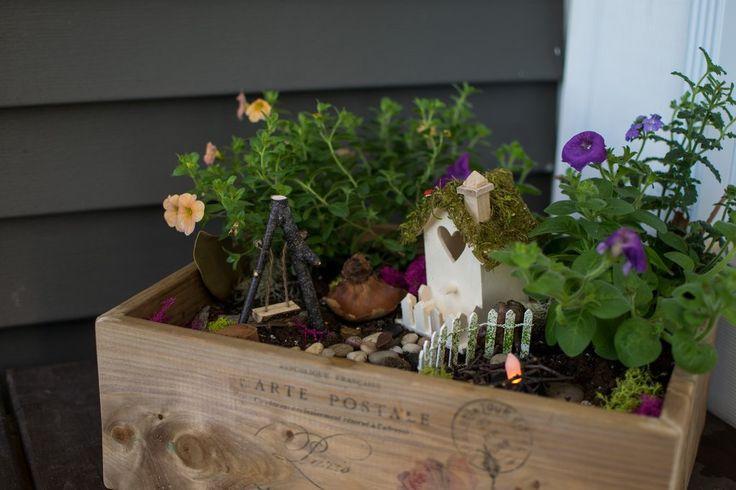 Fairy Garden Box Kit