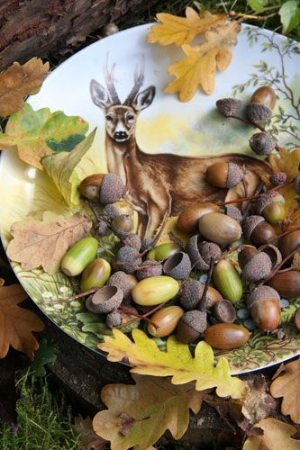 A buck among the acorns....