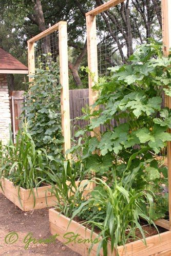 EAT LIVE GROW PALEO  Introduction to Square Foot Gardening. 17 Best images about Square Foot Gardening on Pinterest   Gardens