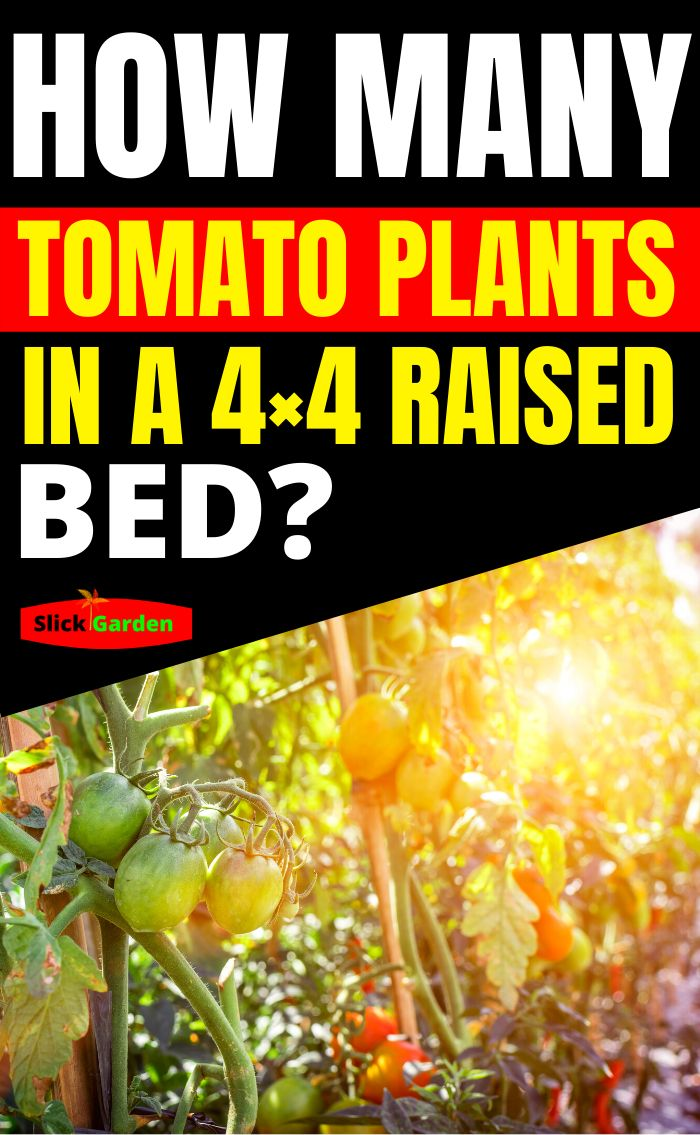 How Many Tomato Plants In A 4x4 Raised Bed in 2020 (With