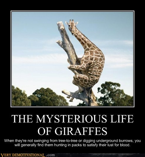 The mysterious life of Giraffes