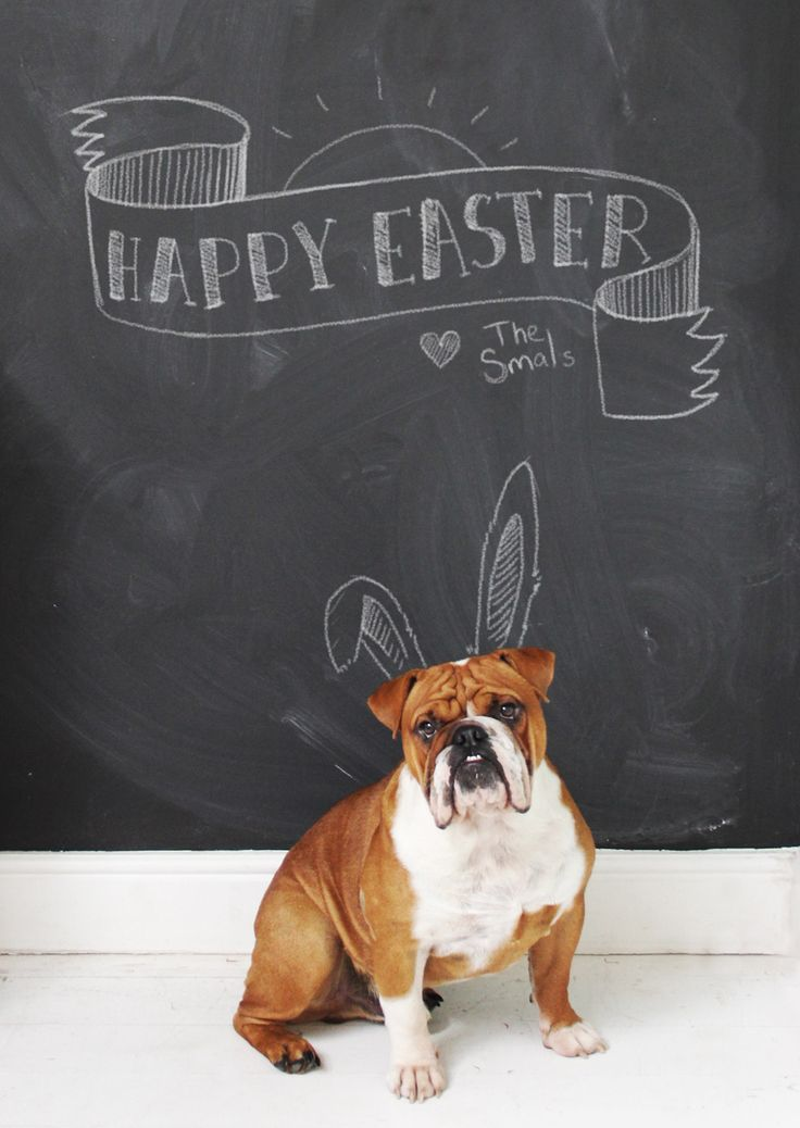 HAPPY EASTER message with bulldog. Happy easter on chalkboard wall.