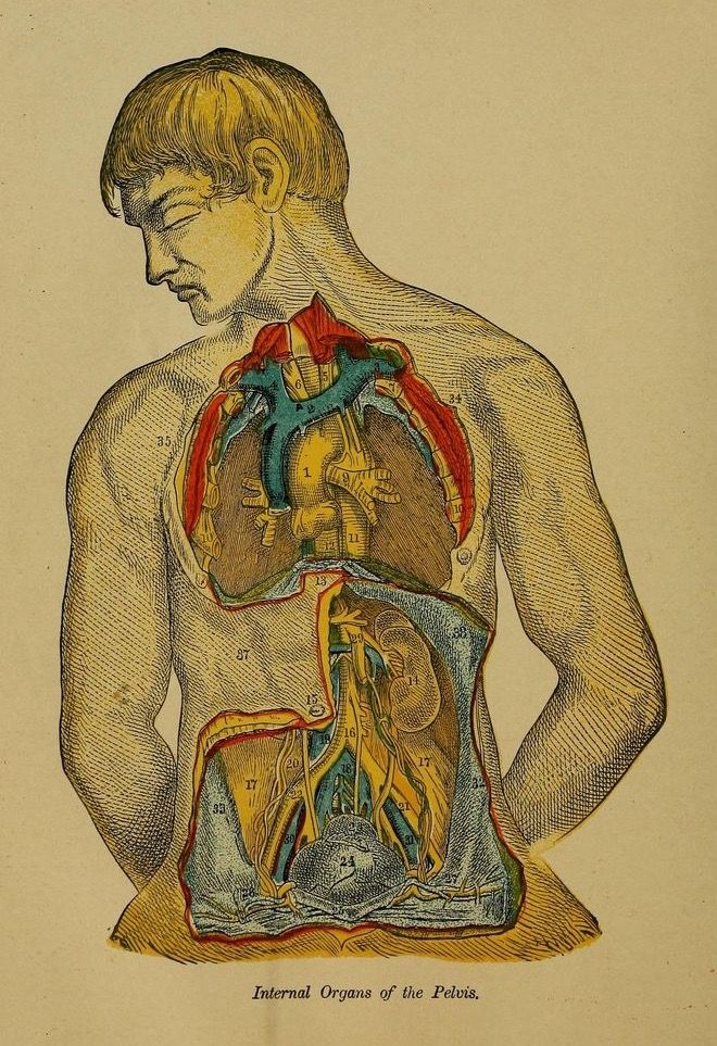 96 best Anatomy images on Pinterest | Anatomy, Anatomy reference and ...