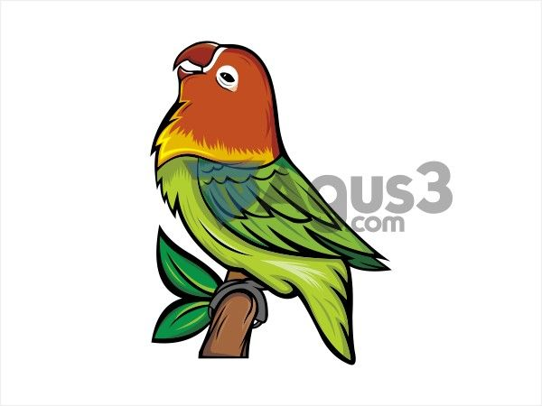 Desain Burung Lovebird Vector Cdr Grafik Burung Png