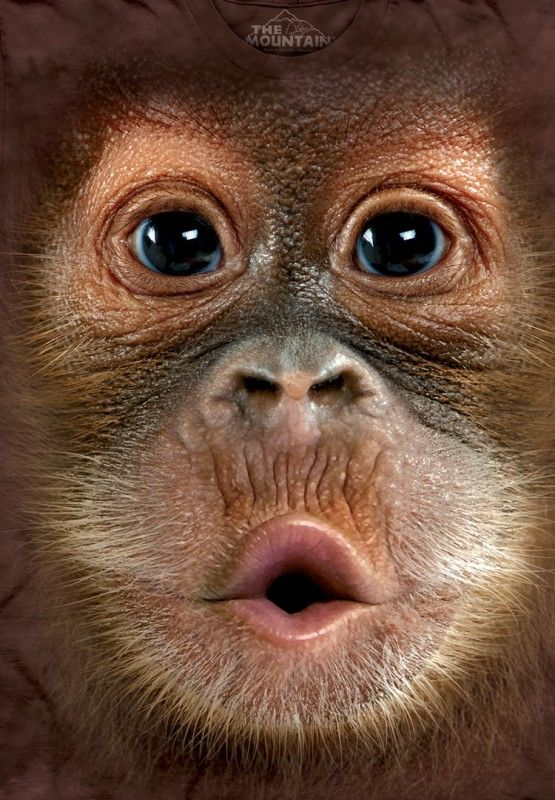 Big Face Baby Orangutan custom t-shirt design by themountain close up design
