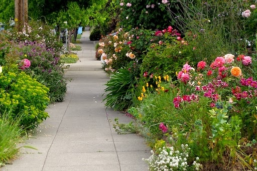 Image result for hilgaard scenic north berkeley gardener