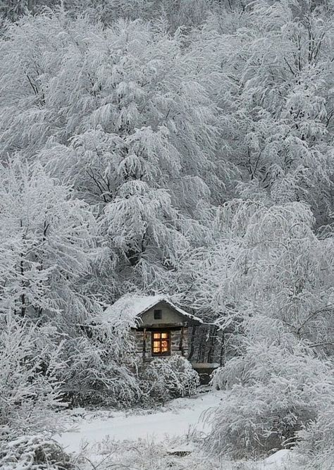 What a winter picture!