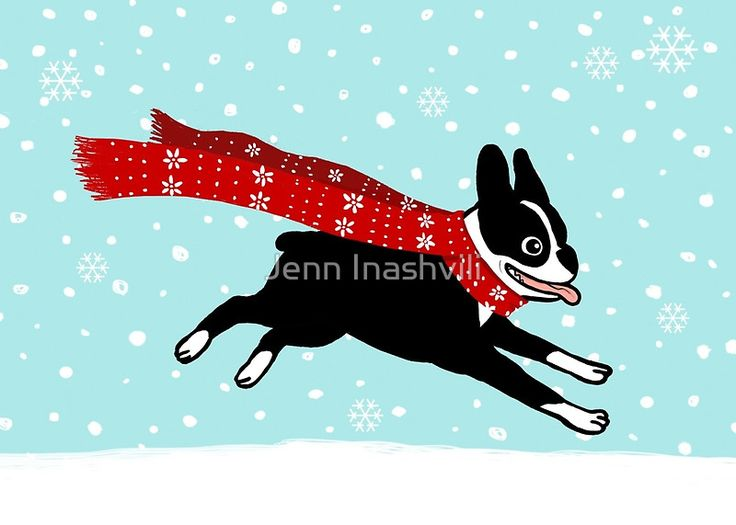 cute holiday cards, stickers, and gifts with Boston Terrier running, wearing red winter scarf, snowflakes falling from blue sky • Also buy this artwork on stationery, apparel, stickers, and more.