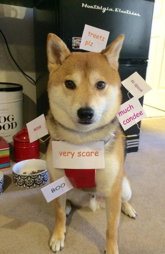 63 best shiba inu meme mmmmmm much dogger images on pinterest doge next level costumes to inspire you heading into this halloween weekend 68 photos solutioingenieria Images
