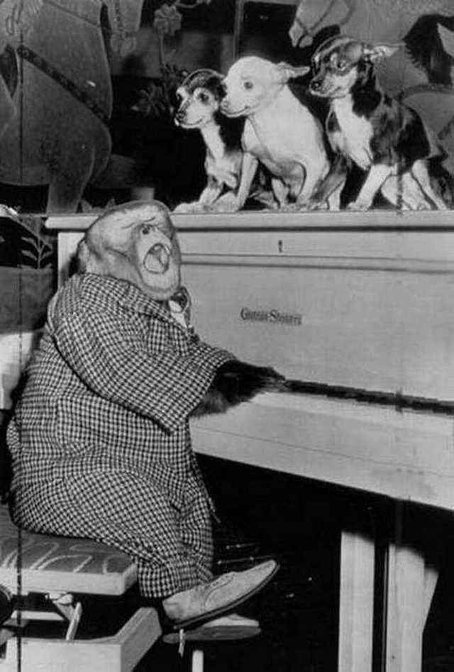 20 Funny Vintage Photos Show Animals Playing Musical Instruments as People