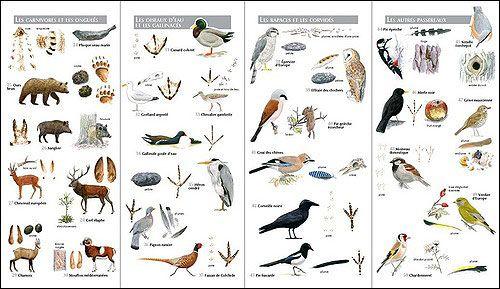 clé de détermination des empreintes animaux | Les Empreintes Des Animaux De La For T Illustration 1 Pictures to pin ...