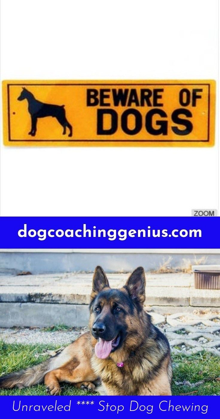Head To The Webpage To Read More On Dog Leash Training Dog Leash