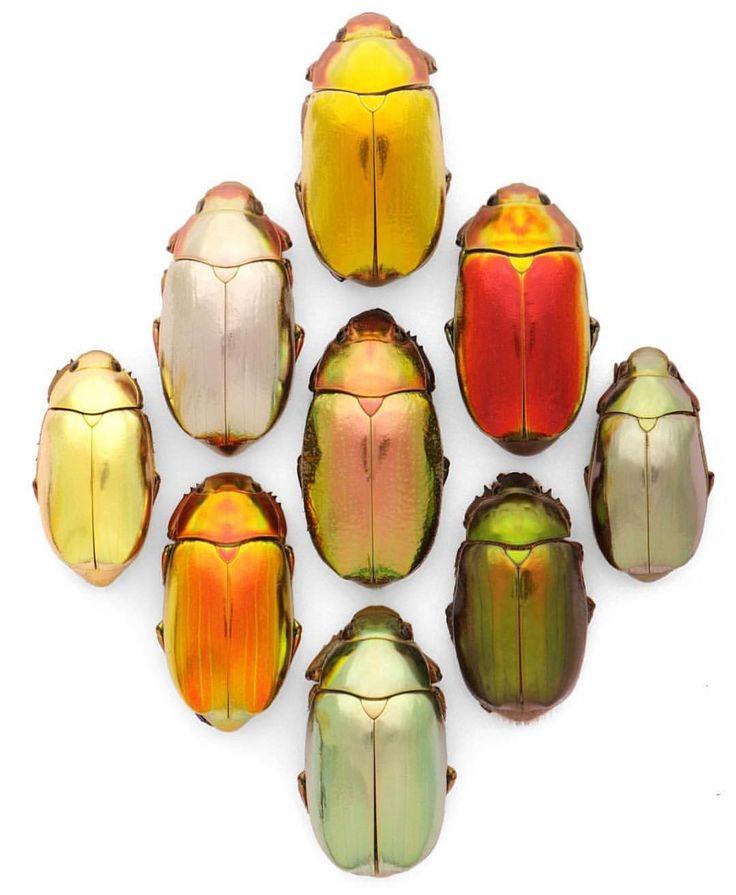 "6,950 Likes, 49 Comments - Botanicaetcetera (@botanicaetcetera) on Instagram: ""@mag.giesheph.erd Jewel scarabs from artist Christopher Marley @pheromone_christophermarley #art…"""