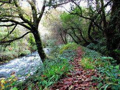 Pera river Path- by Joao Viola (pintor joao viola) Tags: nature water forest river stream moutain pedrgogrande ribeiradepera joaoviola