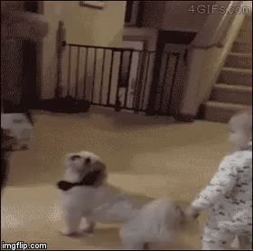 Puppy and baby spinning in circles