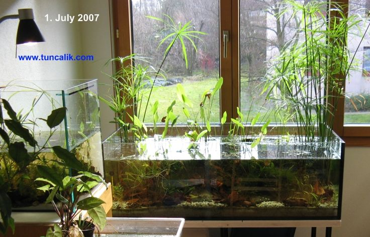 Best 25 aquarium setup ideas only on pinterest for Self sustaining fish tank