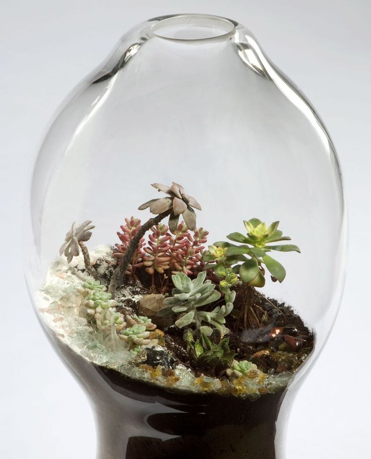 Handblown Glass Terrariums By Paula Hayes