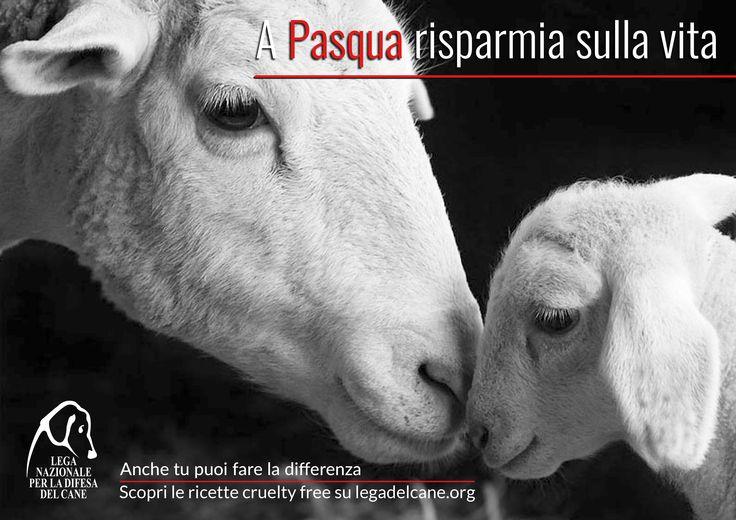 A #Pasqua2015 risparmia sulla vita. #LegadelCane: a tavola scegli l'alternativa #crueltyfree.