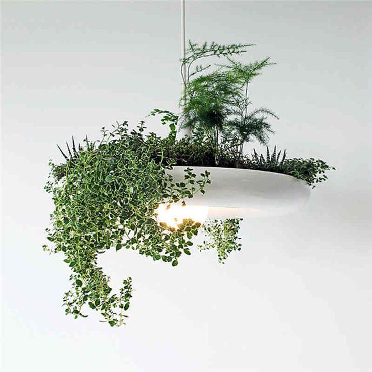 Les 17 meilleures id es de la cat gorie jardins suspendus for Acheter des plantes