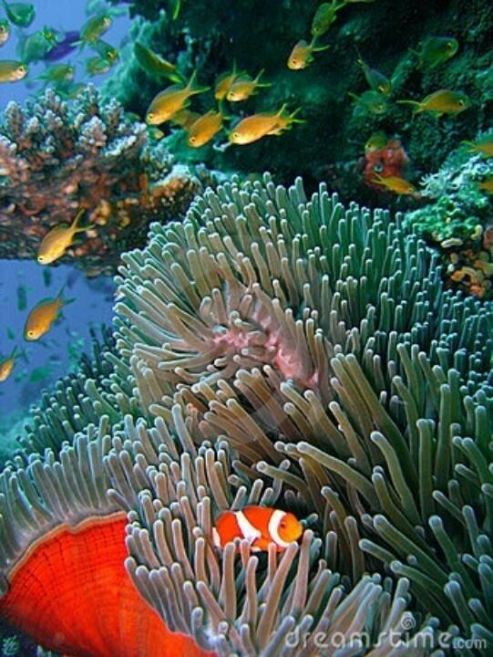 More underwater adventures!