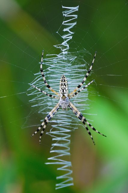 spider essay Nyu has a well-known list of famous alumni aziz ansari, ilana glazer and martin  scorcese are among some of the most popular people in the.