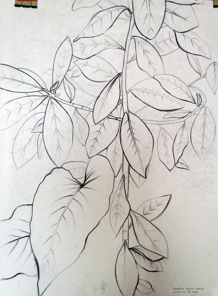 Detalle de hojas Tecnica: carboncillo 50x70 cm Primer semestre 2014 - Dibujo - Artes Visuales