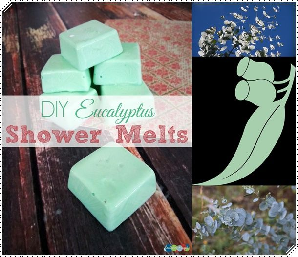 Eucalyptus Essential Oil Shower Melts to Clear Congestion Homesteading  - The Homestead Survival .Com