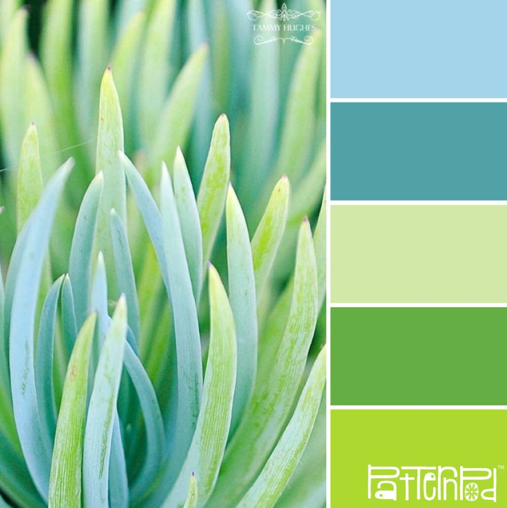 Love this color palette. Would look great in the bathroom.