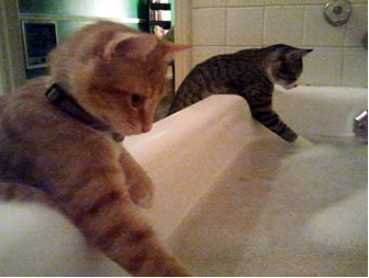 ...Funny Kitty, Soaps Bubbles, Funny Cat, Pets, Bathtime, Bubbles Bath, Funny Animal, Splish Splashes, Bath Time