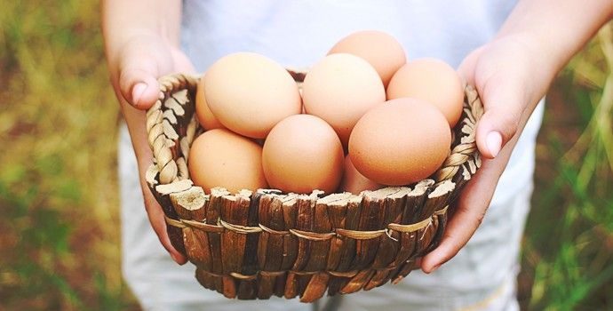 Un œuf contient tous les nutriments nécessaires pour changer une seule cellule en un poussin. Un poussin complet, vivant, avec son squelette, ses entrailles, ses yeux, son sang, et même les plumes et le bec! Sans aucun apport extérieur autre qu'un peu d'oxygène qui traverse la coquille. N'est-ce pas inimaginable?? Comment la nature accomplit-elle ce …