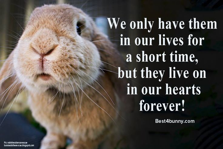 We only have them in our lives for a short time, but they will live on in our hearts forever! www.best4bunny.com