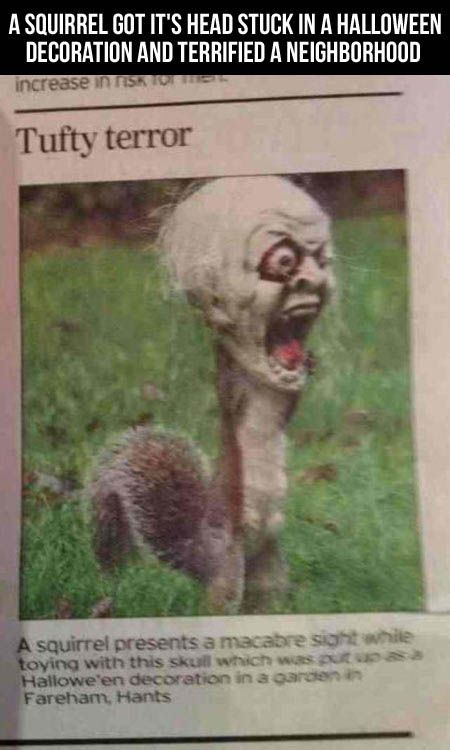 a squirrel got its head stuck in a Halloween decoration and terrified a neighborhood. Hahaha can you imagine seeing this in your front yard?!