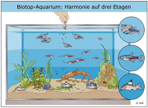 Biotop-Aquarium Das Biotop-Aquarium bildet in der freien Natur vorkommenden Lebe…