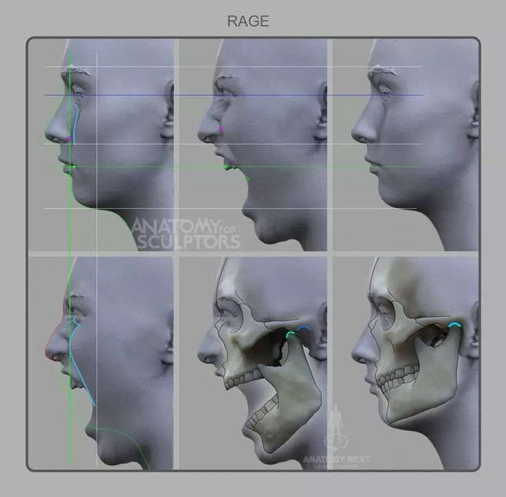 45 besten Ecorche Bilder auf Pinterest | Menschliche anatomie ...