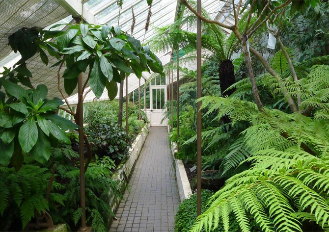 how to build and plant a fernery