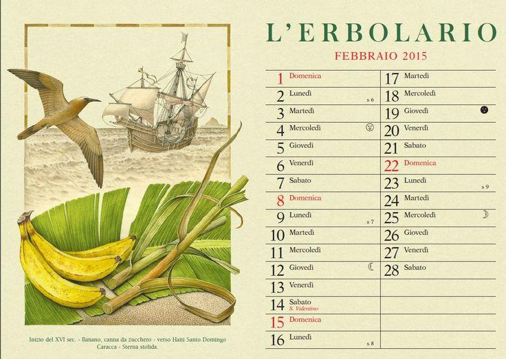In viaggio verso #haiti in questo #febbraio, accompagnati da una bellissima Sterna e assaggiando deliziose banane... continua il nostro #viaggio virtuale intorno al mondo con il #calendario L'Erbolario illustrato da Franco Testa! Buon #lunedi!
