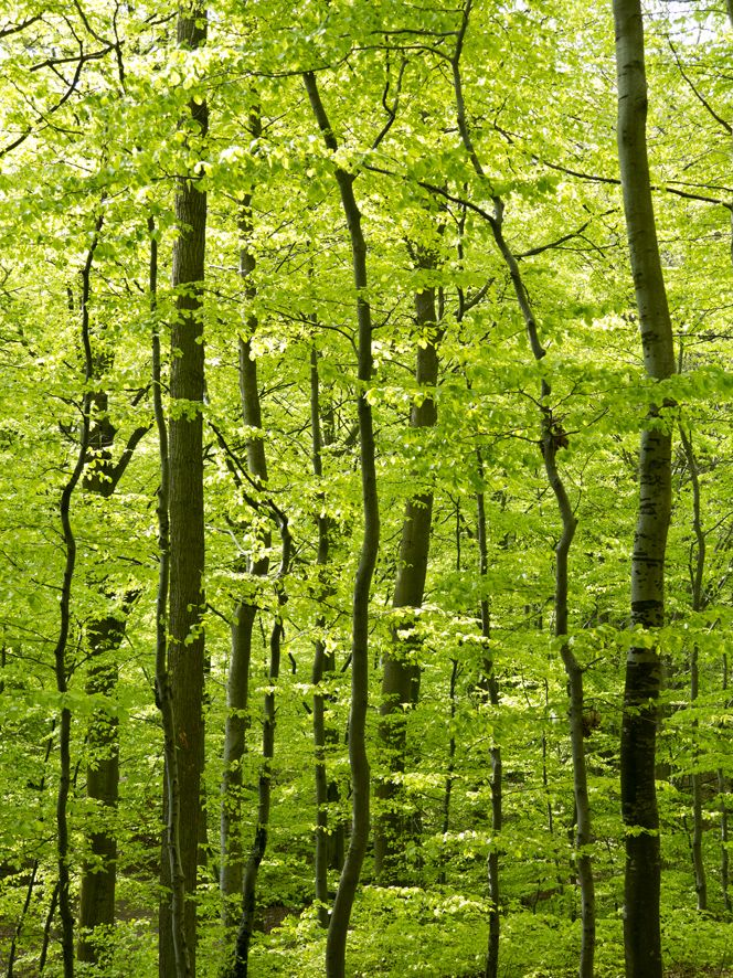 Photo by Tine Bernsen I miss Spring  Green Forrest Nordic Fine Art