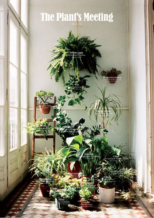 39 best images about inside outside on pinterest gardens alvar aalto and window - Best room plants ...