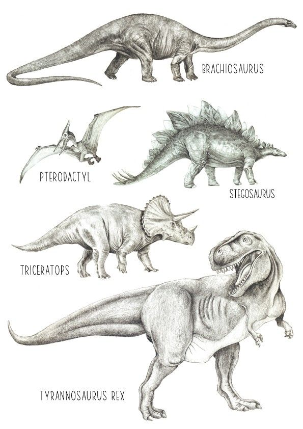Dinosaurs - Archival Print - Available in A4 and A3