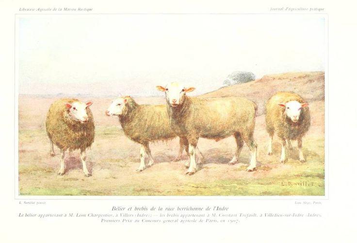 17 best images about razas de ovejas on pinterest - Brebis dessin ...