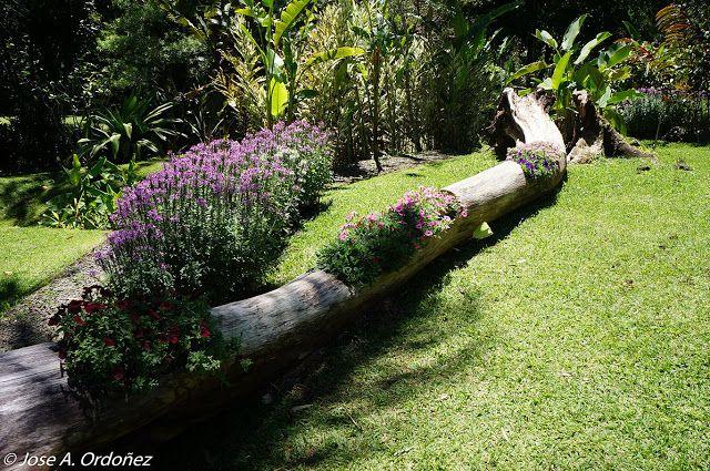 Jardines tropicales: El jardín botanico Else Kienzler en Costa Rica