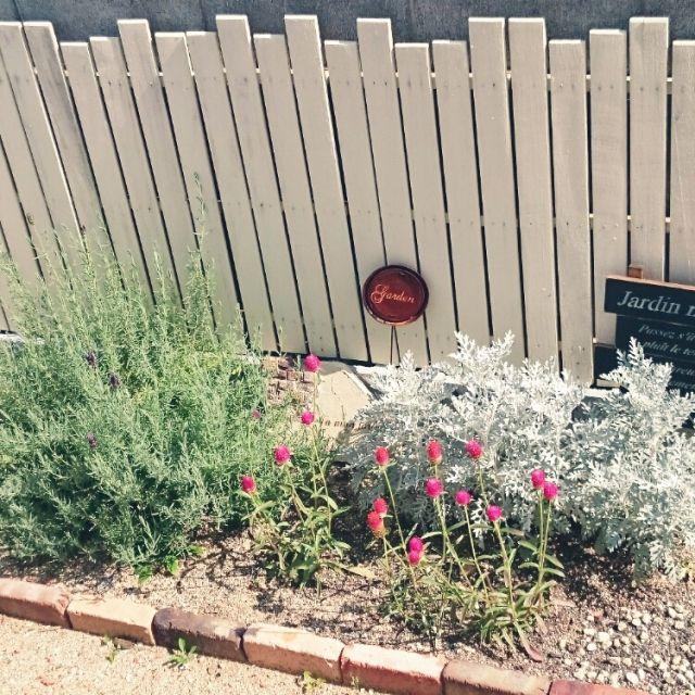 Sachiさんの、花壇,フェンス,モルタル造形,千日紅,ウッドフェンス,ラベンダー,ガーデニング,玄関/入り口,のお部屋写真