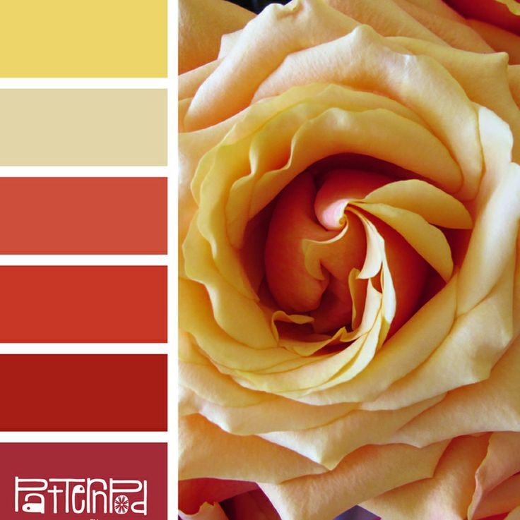Color Palette, Rose, Yellow, Pink, Fuscia, Red.  If you like our color palettes, sign up for our trend letter :-)