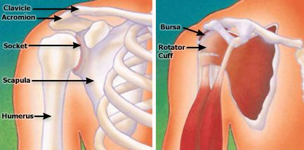 Shoulder Surgery -OrthoInfo - AAOS