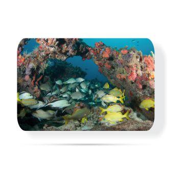Derin Su Balıkları 30 x 40 Cam Tabla
