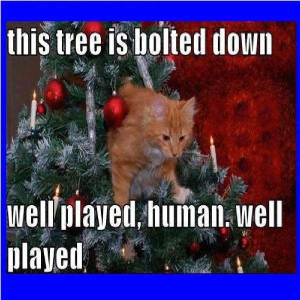 Christmas Memes Clean Christmas Cat Memes Christmas Quotes Funny Christmas Memes Funny