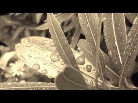 Αλκυόνη Παπαδάκη -Αποσπάσματα ''περί βροχής''